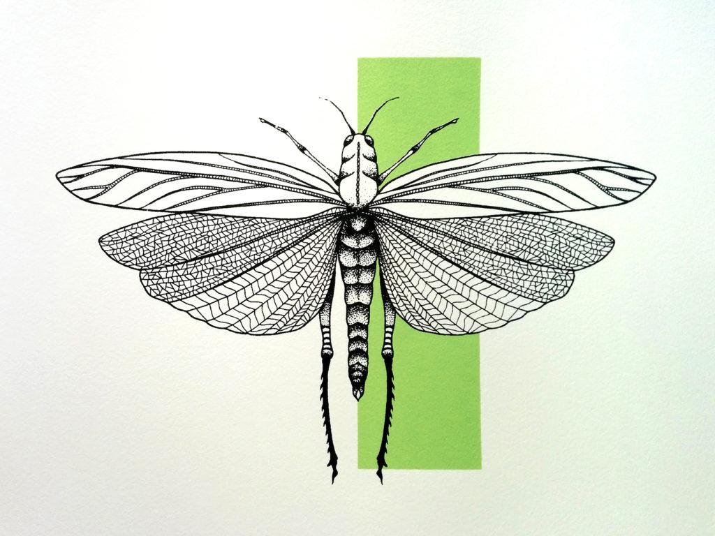 01-libellula-elisa-simoncelli
