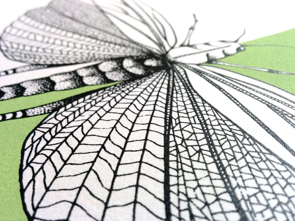 02-libellula-elisa-simoncelli